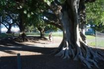 musgrave-park